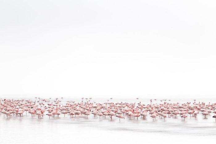 Алессандра Мениконзи, Швейцария / Alessandra Meniconzi , Switzerland, Победитель в категории «Живая природа» (открытый конкурс), Фотоконкурс Sony World Photography Awards 2017