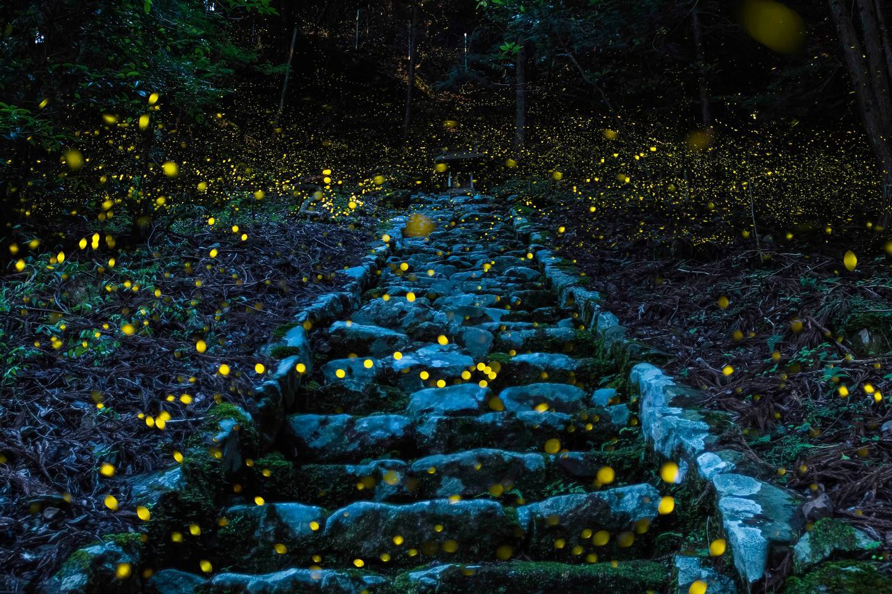Такафуджи, Почетное упоминание, категория Природа, Фотоконкурс Travel Photographer of the Year
