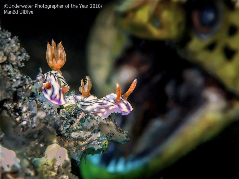 Ман БД, Малайзия / Man BD, Malaysia, Перспективный подводный фотограф года, Фотоконкурс «Подводный фотограф года 2018»