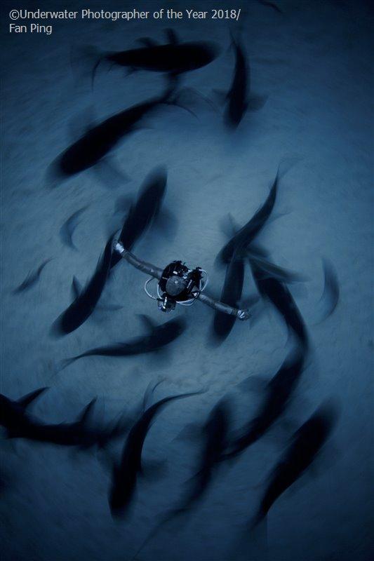 Фан Пинг, Китай / Fan Ping, China, 2-е место в категории «Широкий угол», Фотоконкурс «Подводный фотограф года 2018»