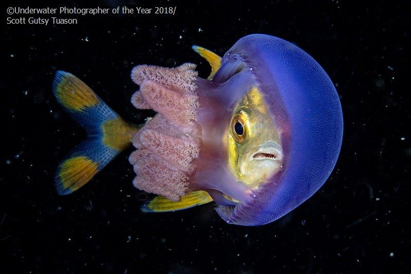 Скотт Гутси Туасон, Филиппины / Scott Gutsy Tuason, Philippines, 2-е место в категории «Поведение», Фотоконкурс «Подводный фотограф года 2018»