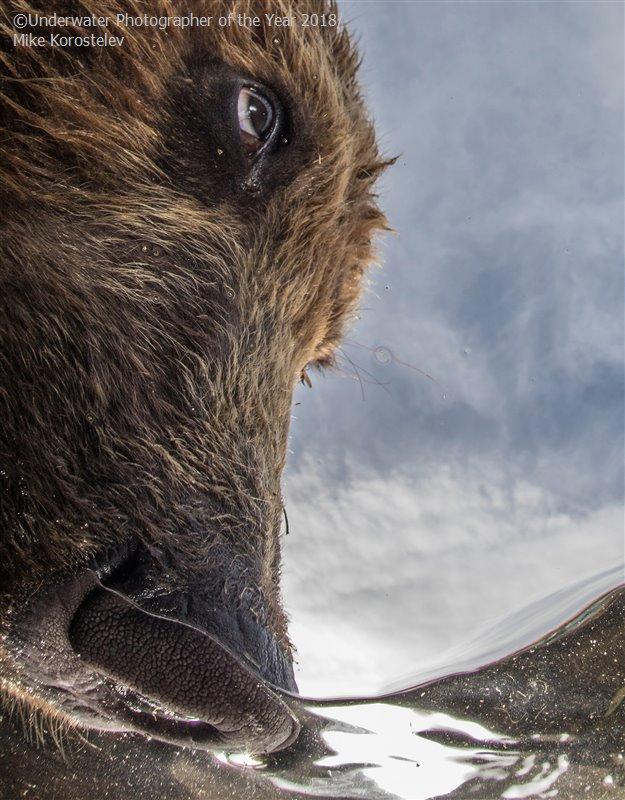 Майк Коростелев, Россия / Mike Korostelev, Russia, 2-е место в категории «Портрет», Фотоконкурс «Подводный фотограф года 2018»