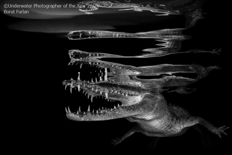Борут Фурлан, Словения / Borut Furlan, Slovenia, Победитель в категории «Чёрно-белое», Фотоконкурс «Подводный фотограф года 2018»