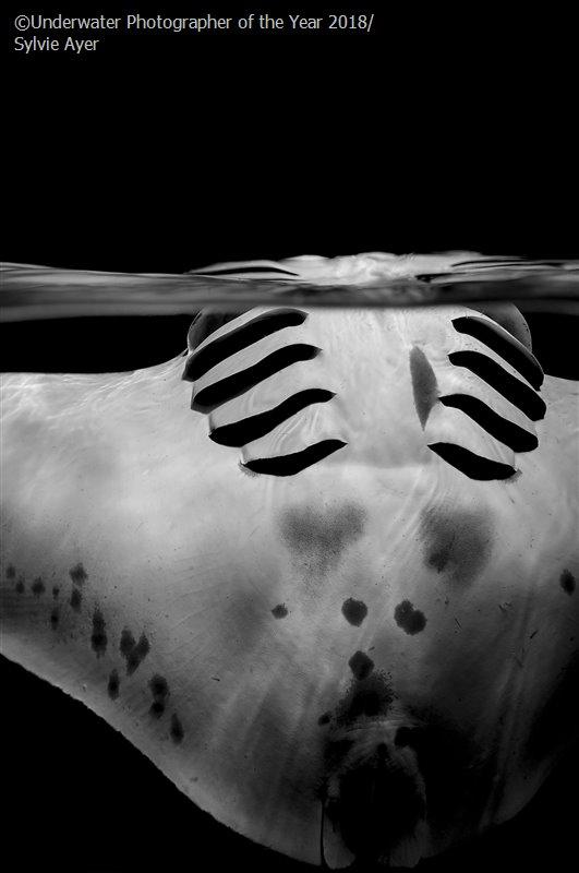 Сильвия Айер, Швейцария / Sylvie Ayer, Switzerland, 2-е место в категории «Чёрно-белое», Фотоконкурс «Подводный фотограф года 2018»