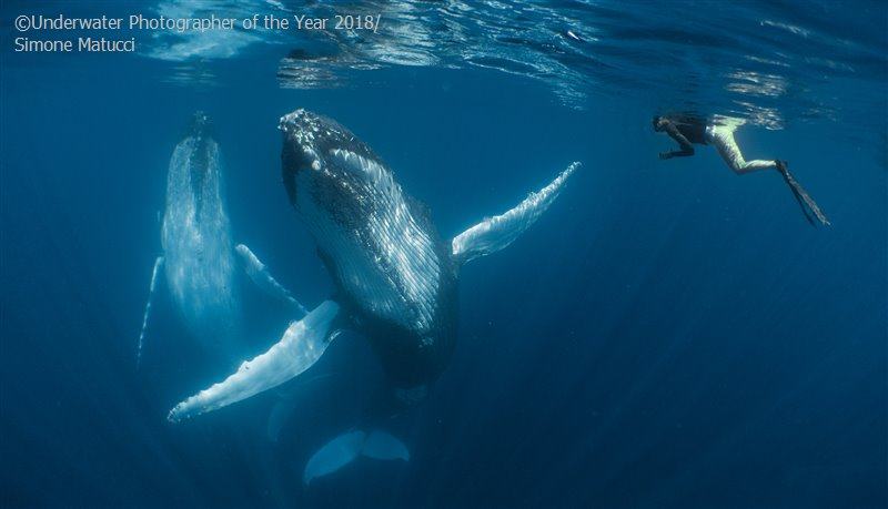 Симона Матуччи (Новая Зеландия) / Simone Matucci (New Zealand), Победитель в категории «Компакт», Фотоконкурс «Подводный фотограф года 2018»