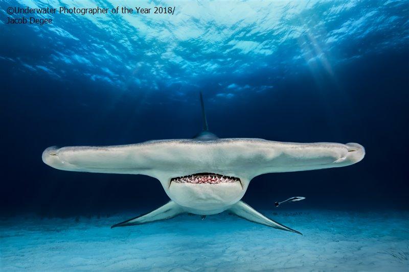 Якуб Деги (Польша) / Jacob Degee (Poland), 2-е место в категории «Перспективный фотограф», Фотоконкурс «Подводный фотограф года 2018»