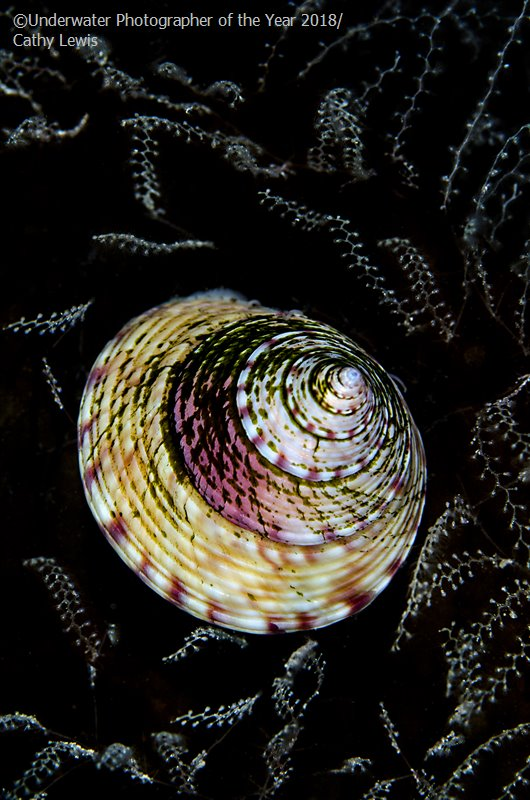 Кэти Льюис (Великобритания) / Cathy Lewis (UK), 2-е место в категории «Британское подводное макро», Фотоконкурс «Подводный фотограф года 2018»