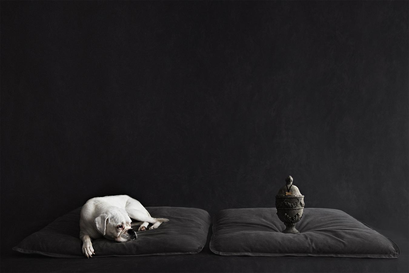 Келли Браун / Kelly Brown, Первое место в категории «Портрет — Животные / Домашние животные», Фотоконкурс WPPI Annual Print Competition