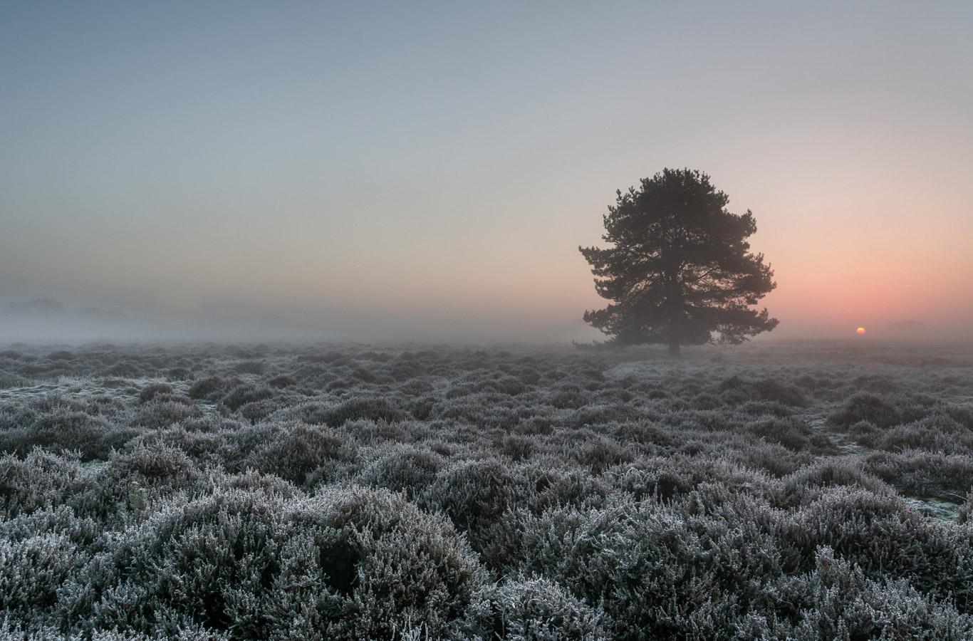 Лори Рид / Laurie Reed, Фотоконкурс RMetS / RPS Weather