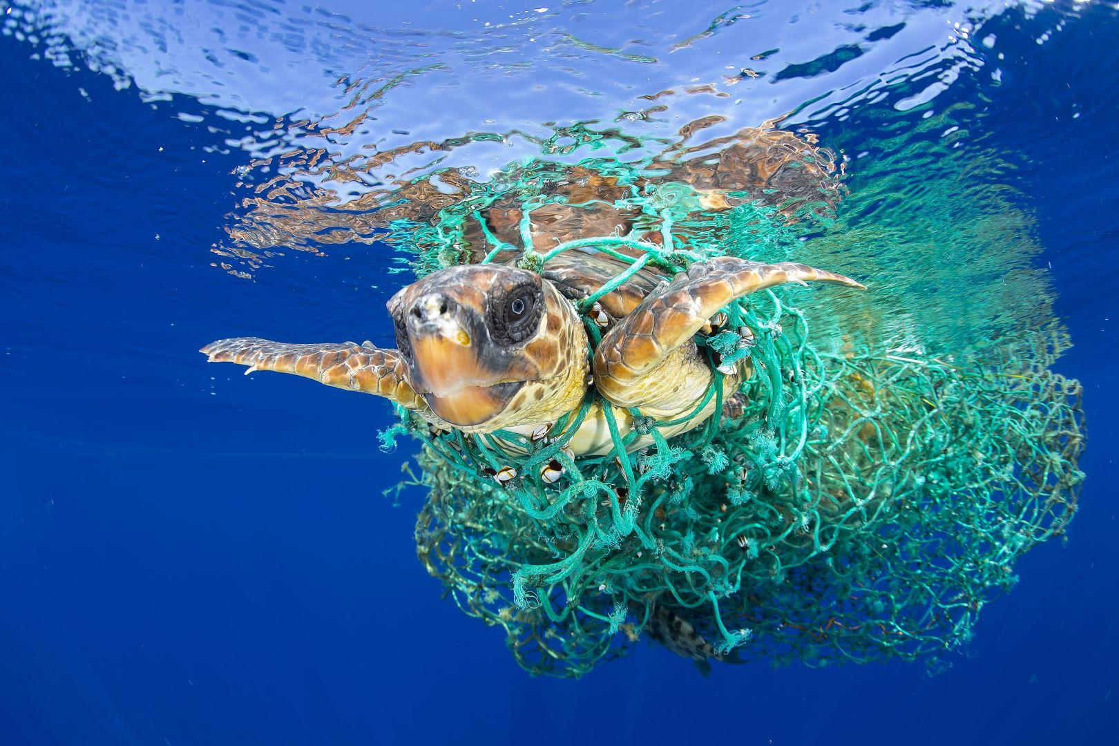 Морская черепаха в ловушке, © Фрэнсис Перес, Испания, Фотоконкурс World Press Photo