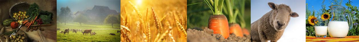 Конкурс фотографии «Агро-Фото»