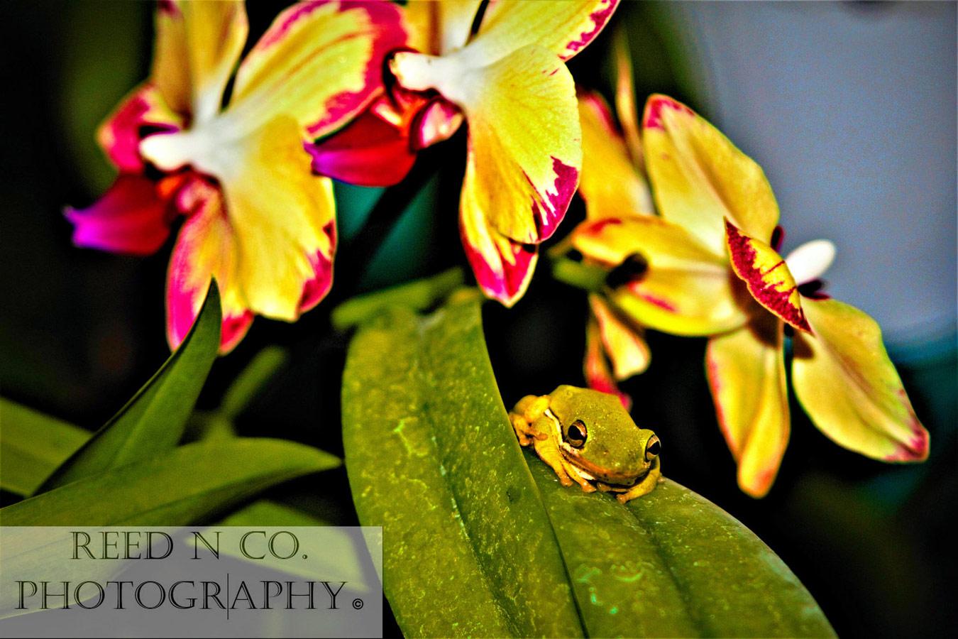 Орхидея 1, © Нэнси Рид, Третье место, Художественный конкурс «Все женщины» — All Women