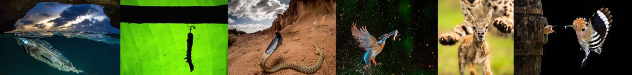 Фотоконкурс «Поведение животных»