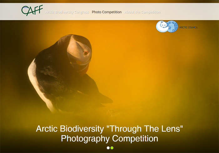 Фотоконкурс «Арктическое биоразнообразие через объектив» — Arctic Biodiversity Through the Lens