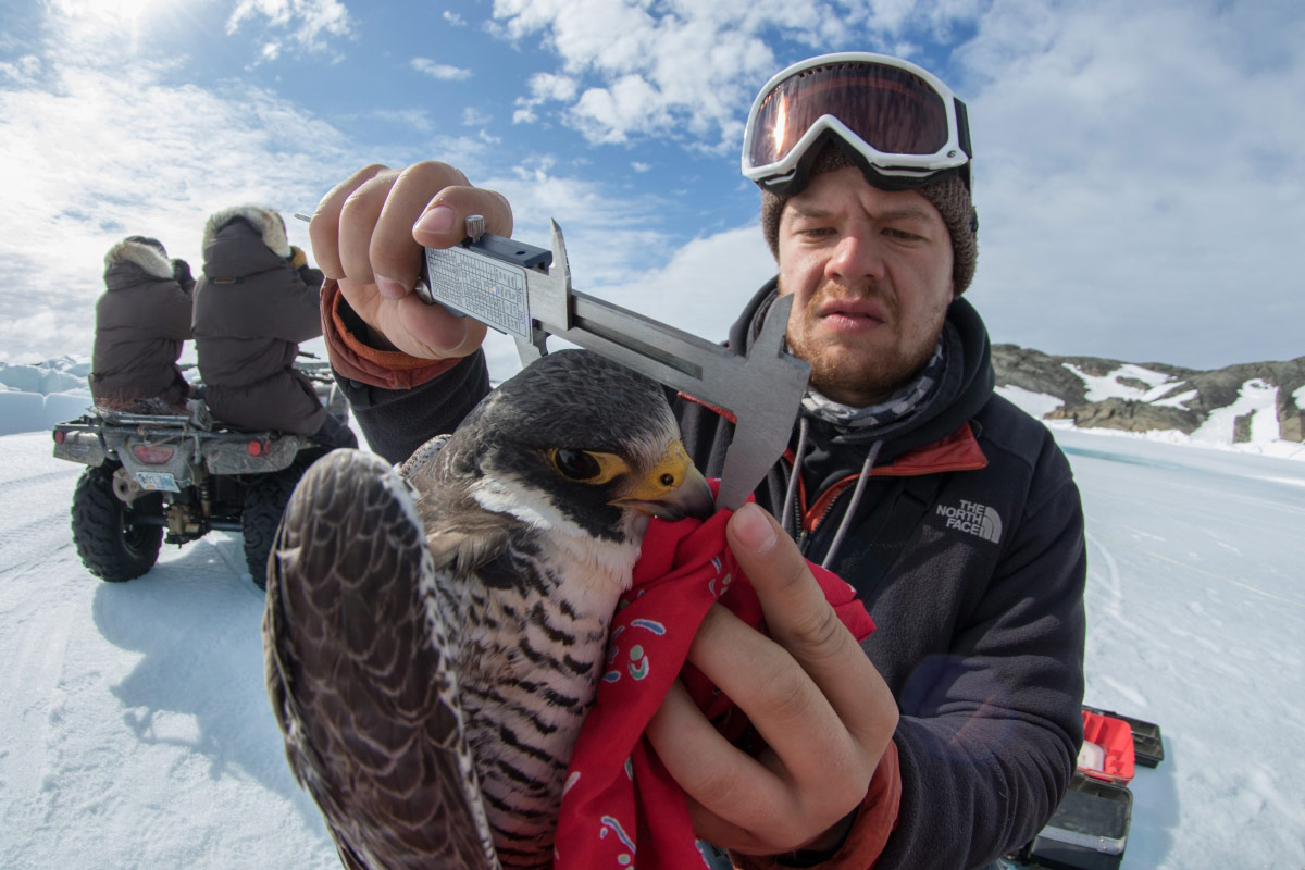 © Александр Паймент, 2 место в категории «Бизнес и наука в Арктике», Фотоконкурс «Арктическое биоразнообразие через объектив»
