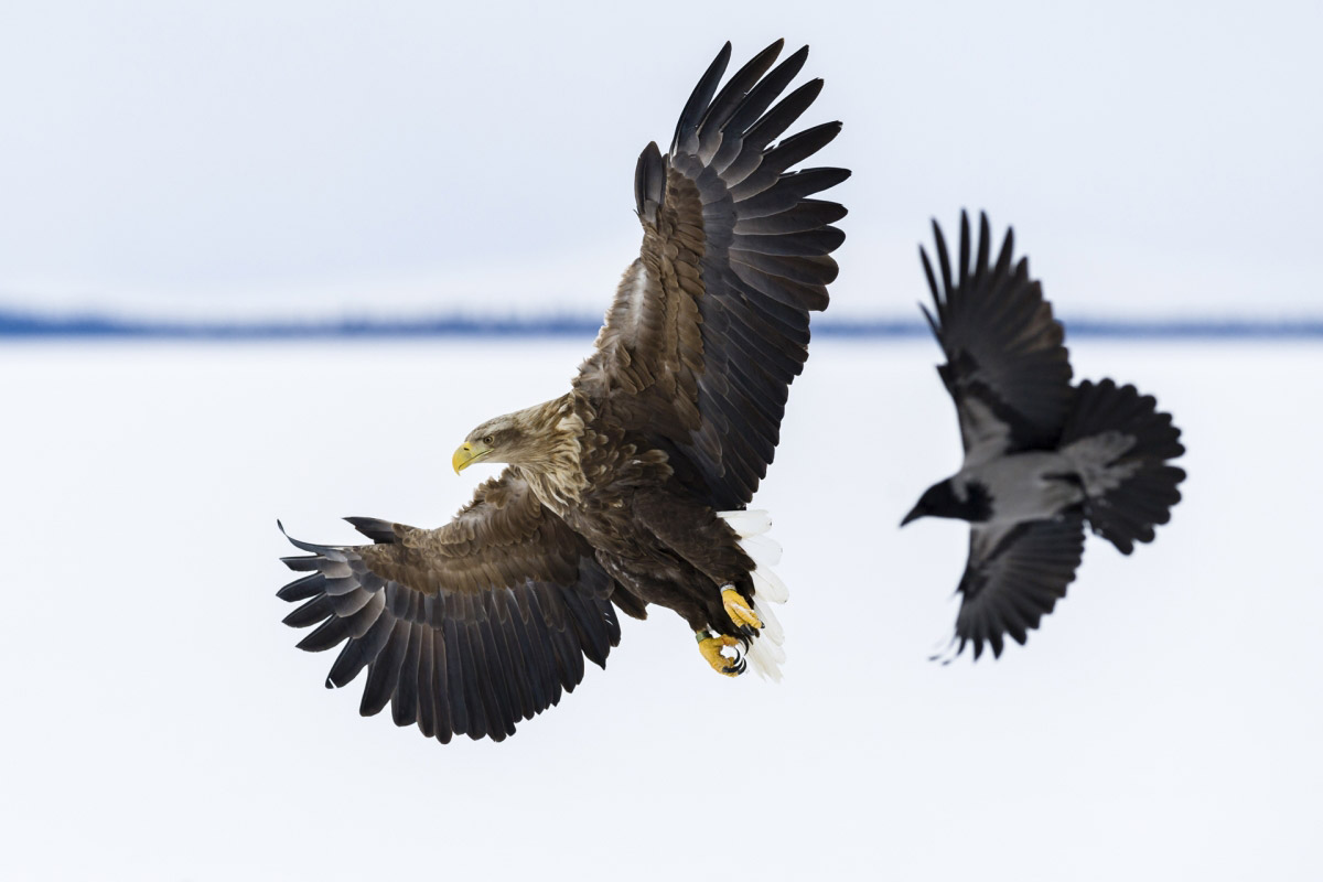© Лассе Куркела, Победитель в категории «Молодёжная», Фотоконкурс «Арктическое биоразнообразие через объектив»
