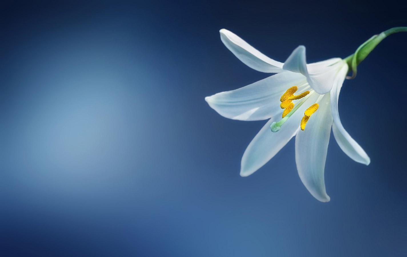 Фотоконкурс «Художественное фото в синем» — Blue Fine Art