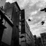 © Тадаши Ониши, Затерянные в Синдзюку, Победитель категории «Уличная фотография» (серия)