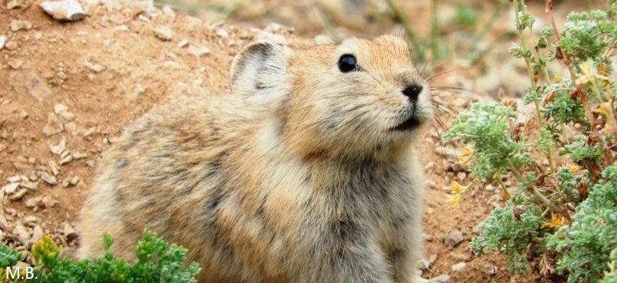 Фотоконкурс проекта «Атлас млекопитающих России»