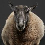 Сказочные животные, © Питер Самуэльс, Сан-Франциско, США, Первое место в категории «Персональная работа», Фотоконкурс домашних животных «Лучшие друзья»
