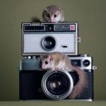 Без названия, © Дэвид Йео, Лондон, Великобритания, Первое место в категории «Персональная работа», Фотоконкурс домашних животных «Лучшие друзья»