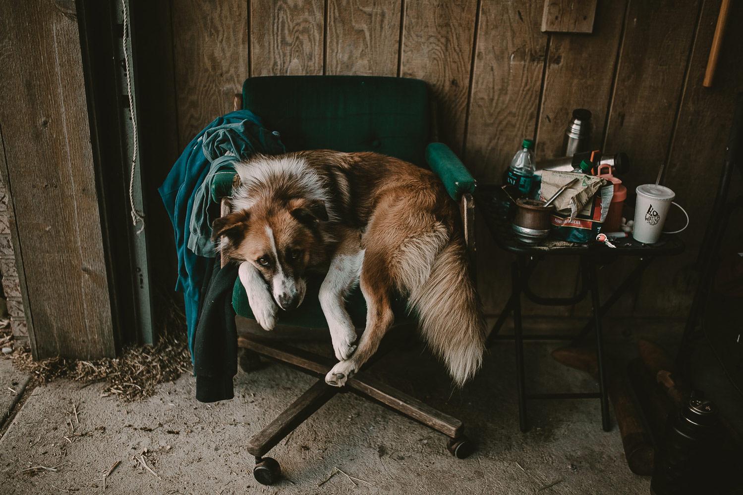 Запретное кресло, © Лия Льюис, Аврора, США, Финалист категории «Персональная работа», Фотоконкурс домашних животных «Лучшие друзья»