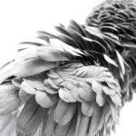 Руби, © Дуг Хамен, Эванстон, США, Финалист категории «Персональная работа», Фотоконкурс домашних животных «Лучшие друзья»