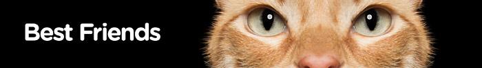 Фотоконкурс домашних животных «Лучшие друзья»