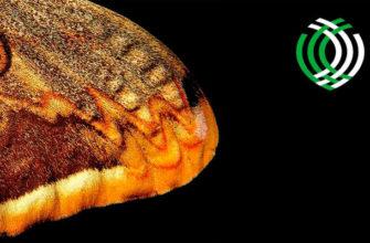 Фотоконкурс Королевского общества биологии — Royal Society of Biology