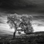 Инфракрасная тишина, © Натан Вирт / Nathan Wirth, США, Почётный отзыв, Фотоконкурс «Чёрно-белая фотография» — Black & White Photography Awards — Журнал Dodho