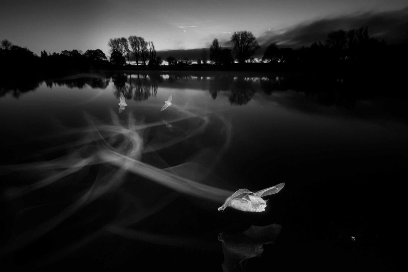 Следы на рассвете, Коут Уотер Кантри Парк, Суиндон, © Пол Колли, Победитель конкурса, Конкурс фотографий дикой природы British Wildlife