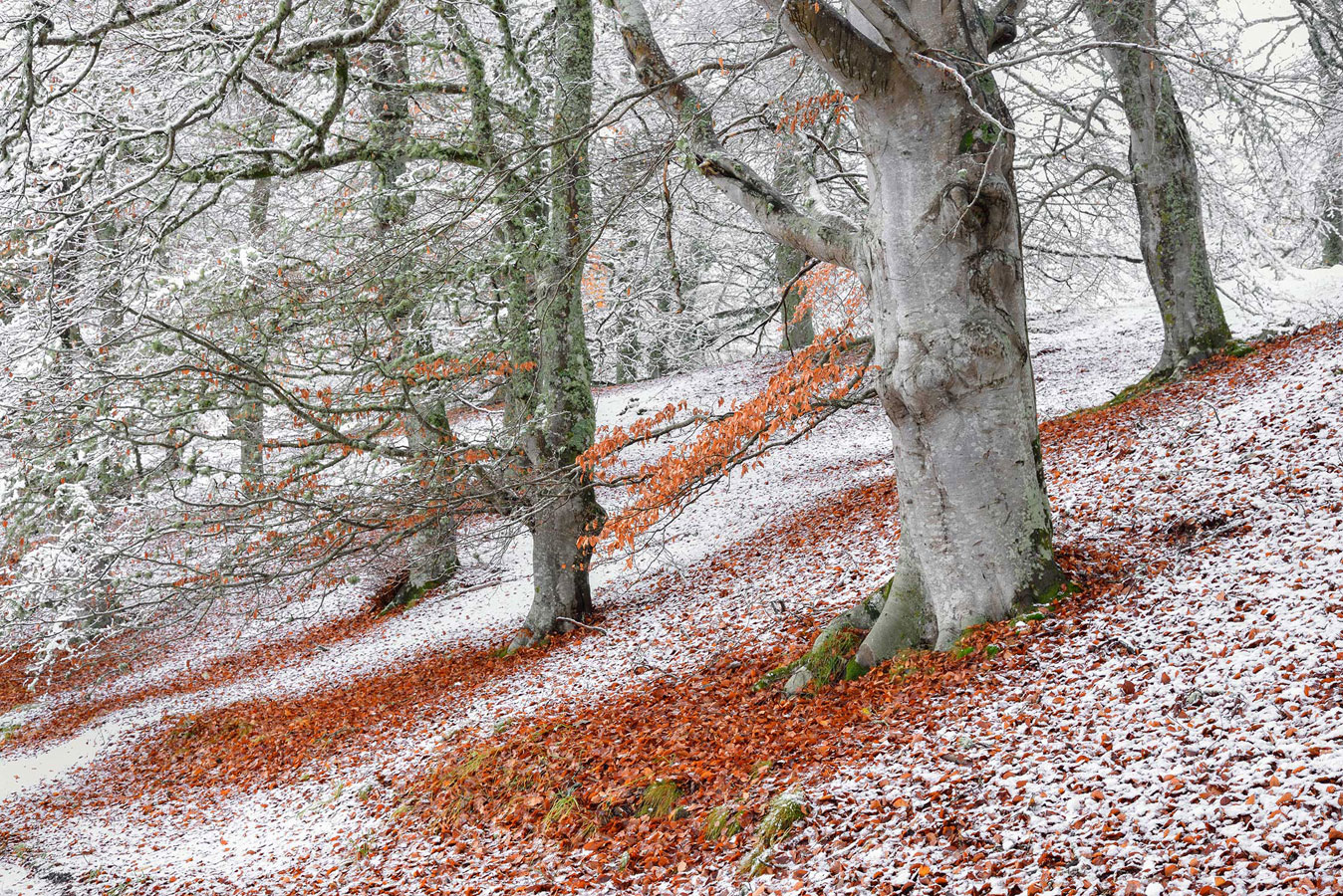Перекрытие сезонов. Авимор, Хайленд, Шотландия, © Джеймс Родди, Конкурс фотографий дикой природы British Wildlife