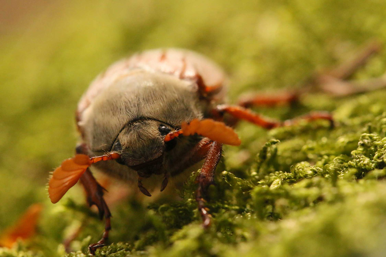 Кто сказал, что жучки не милые? Борроудейл, Камбрия, © Люси Фаррелл, Конкурс фотографий дикой природы British Wildlife