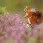 © Нил Макинтайр, Победитель категории «Британские сезоны», Конкурс фотографий дикой природы British Wildlife