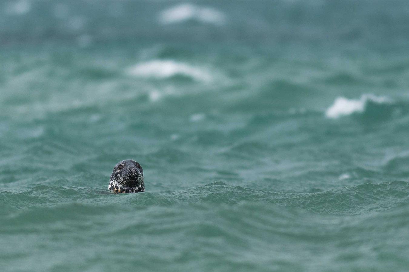 © Бен Уоткинс, Победитель категории «Документальная серия», Конкурс фотографий дикой природы British Wildlife