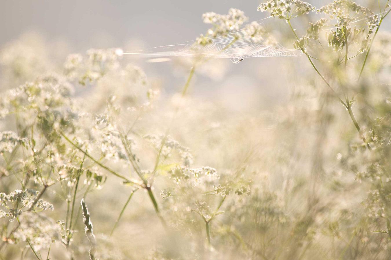Долгое ожидание. Уилсфорд, Уилтшир, © Джейк Кнейл, Конкурс фотографий дикой природы British Wildlife