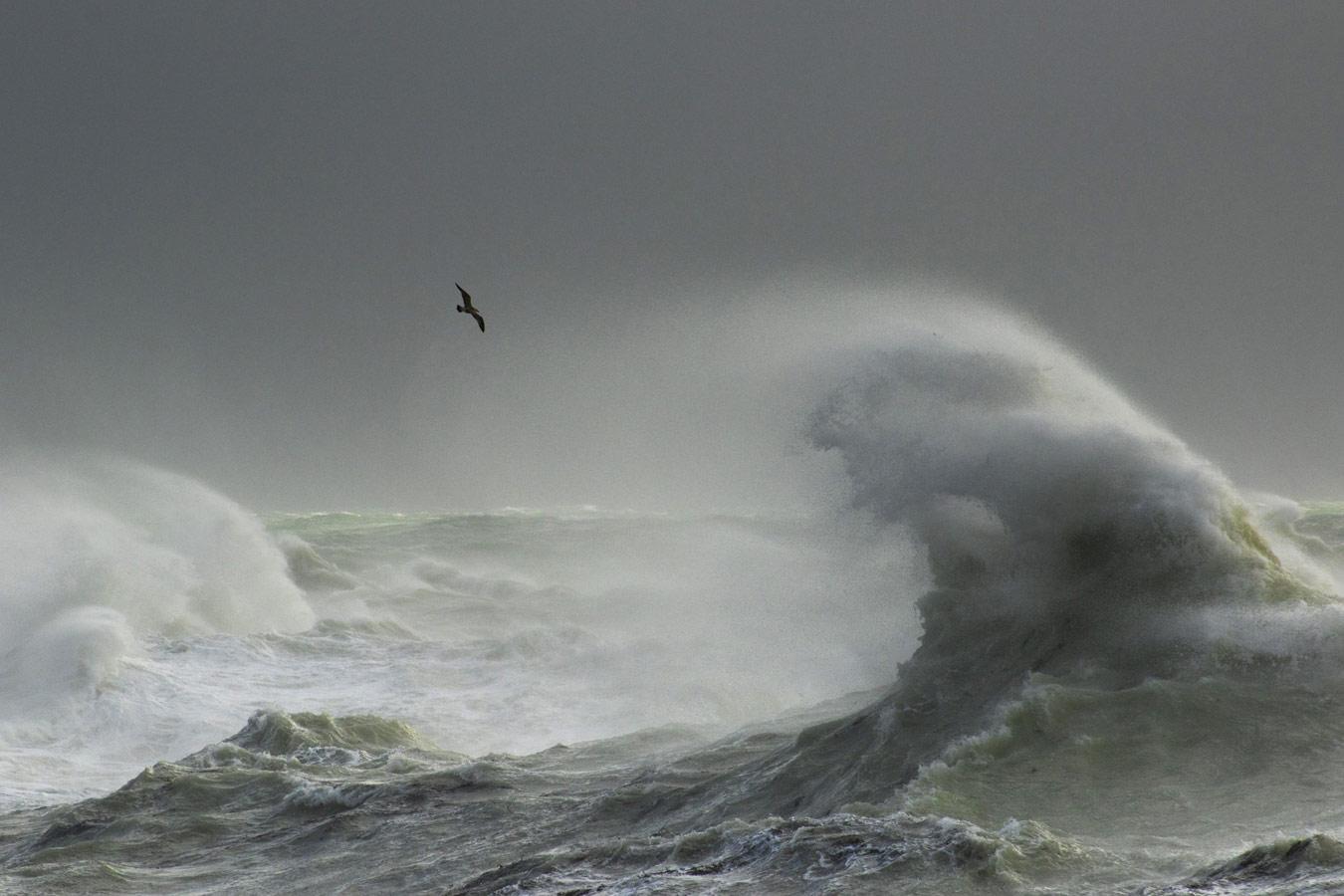 Чайка в бурю. Ньюхейвен, Восточный Суссекс, © Крейг Денфорд, Конкурс фотографий дикой природы British Wildlife