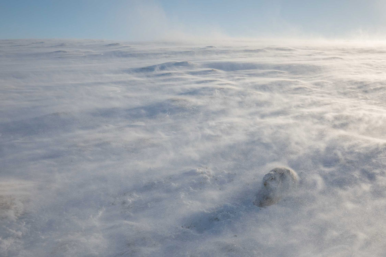 Эффектное уединение. Национальный парк Кэрнгормс, Шотландия, © Эндрю Паркинсон, Конкурс фотографий дикой природы British Wildlife