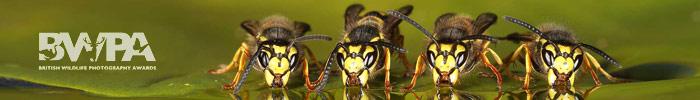 Конкурс фотографий дикой природы British Wildlife