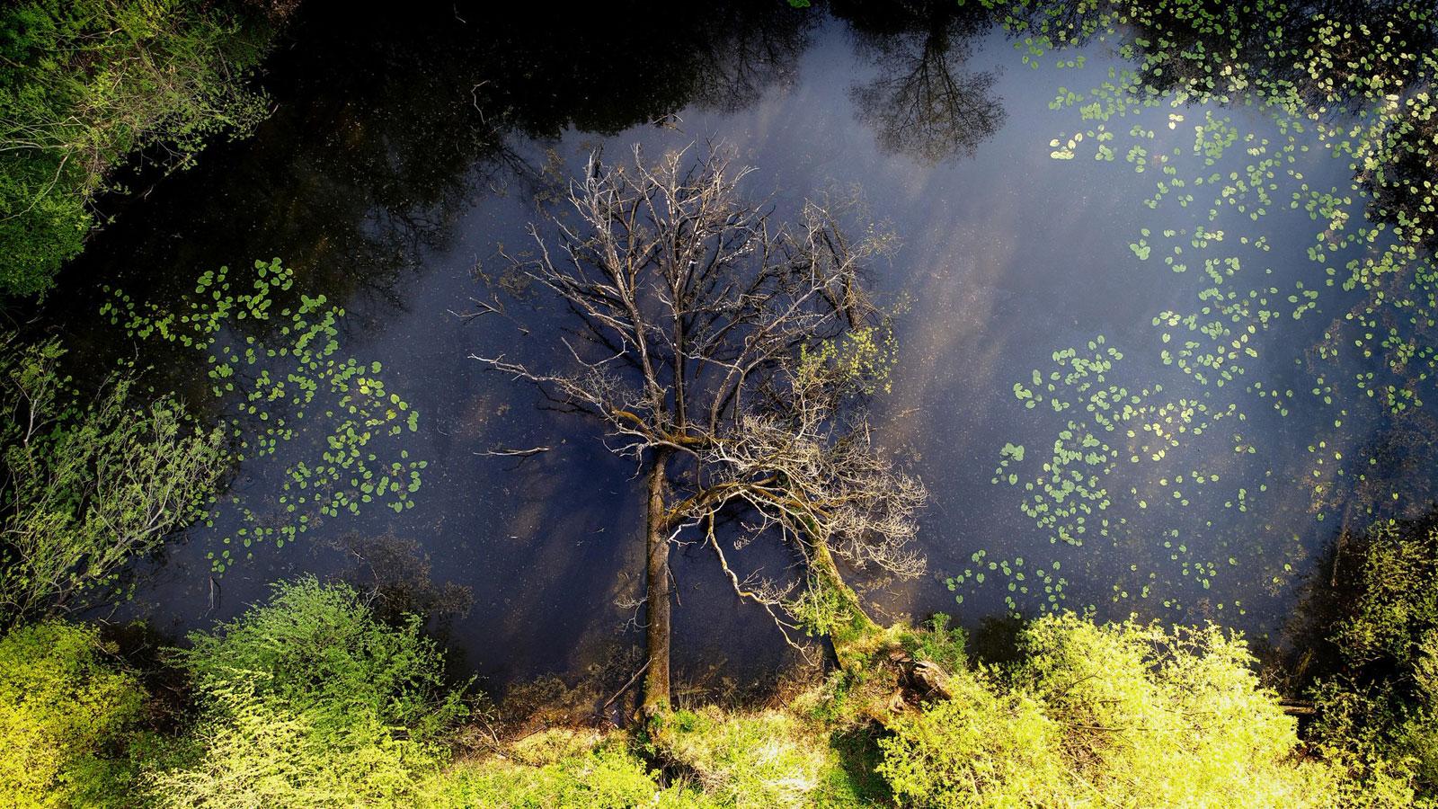Падшая природа, © Радослав Зубрицкий, Природа, Фотоконкурс CEWE