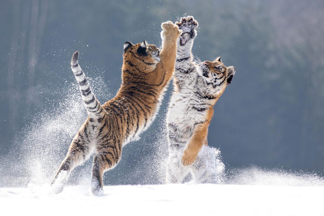 Дай пять, © Хайди Шпиглер, Животные, Фотоконкурс CEWE