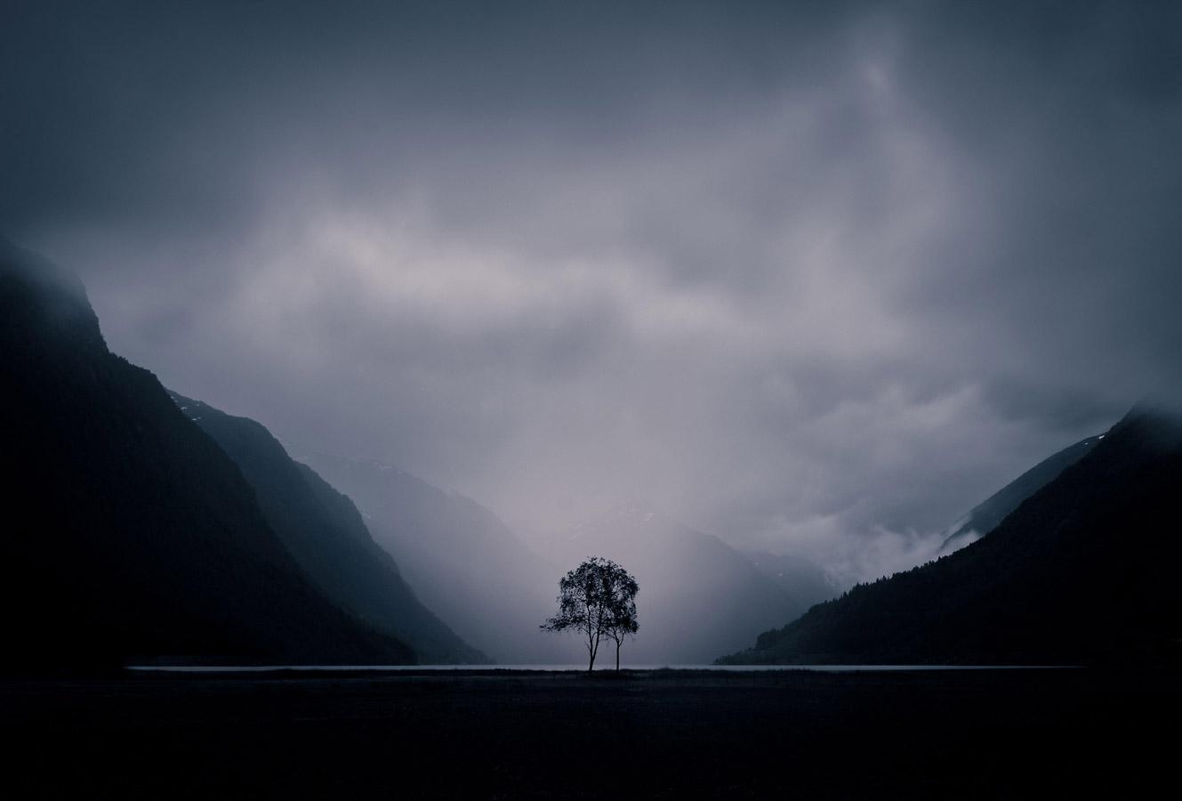 Дерево, © Павла Балькова, Природа, Фотоконкурс CEWE