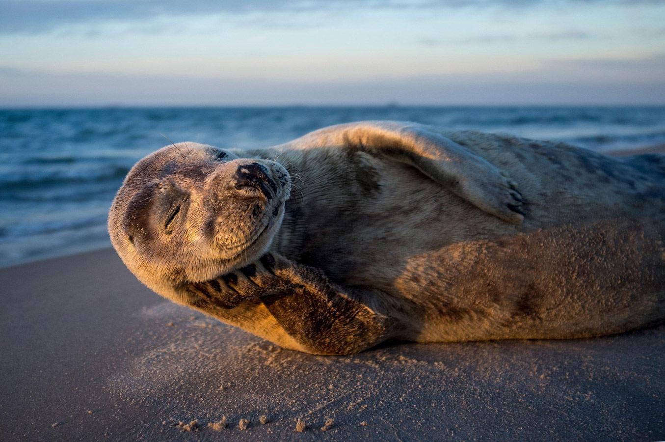 Счастливая жизнь, © Ларс Лыкке, Животные, Фотоконкурс CEWE
