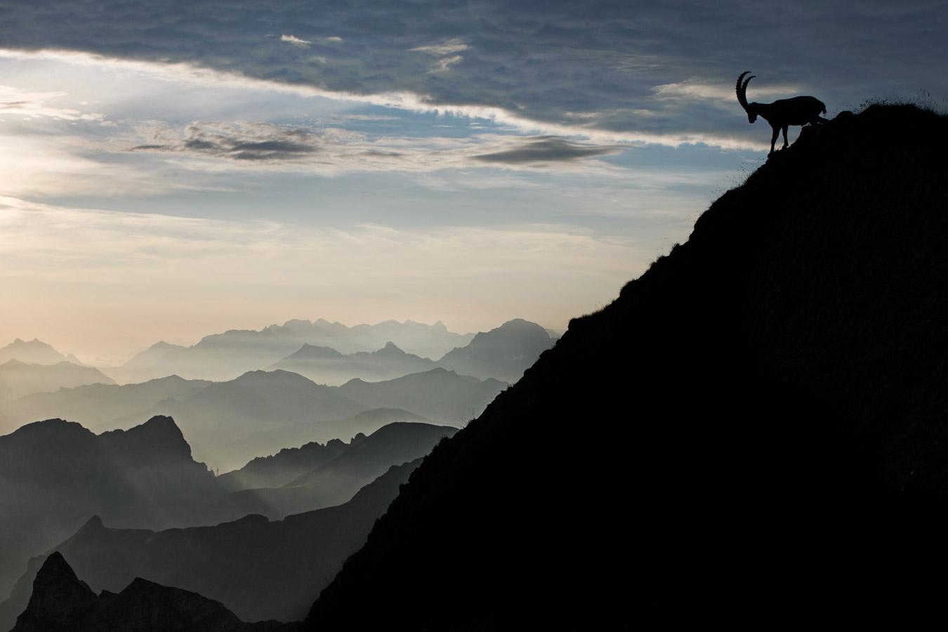 На вершине, © Радомир Якубовский, Природа, Фотоконкурс CEWE