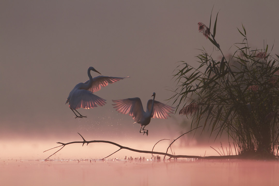 Волшебное утро, © Гжегож Зимний, Животные, Фотоконкурс CEWE