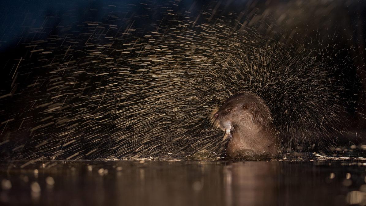 © Томас Хинше, Животные, Фотоконкурс CEWE
