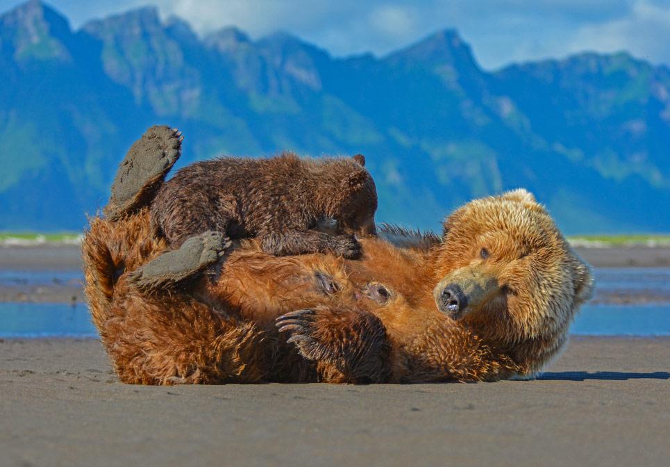 © Кнуд Фуусгаард, Животные, Фотоконкурс CEWE