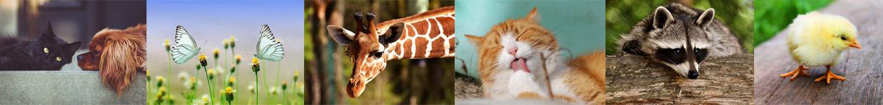 Фотоконкурс животных от журнала Click