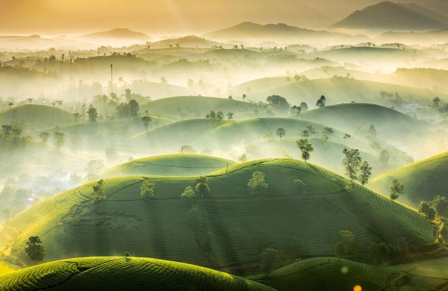 """© Ву Чунг Хуан, """"Чайные холмы"""""""