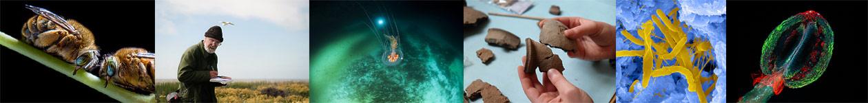 Конкурс научных фотографий «Снимай науку»
